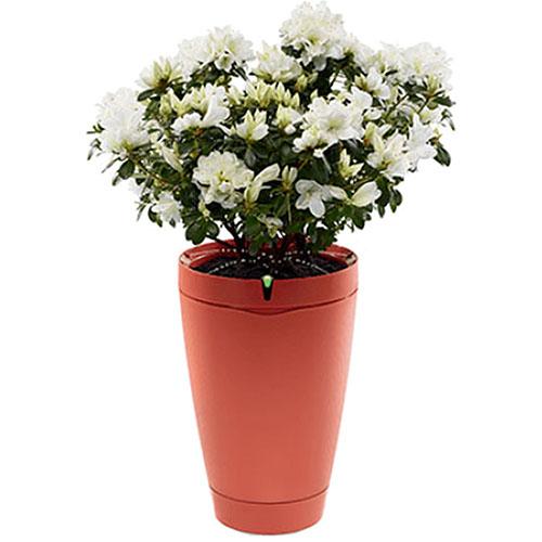 Умный горшок для растений Parrot Pot красныйУмные сады и фермы<br>Parrot Pot – это умный горшок, ухаживающий за вашими растениями.<br><br>Цвет товара: Красный<br>Материал: Пластик