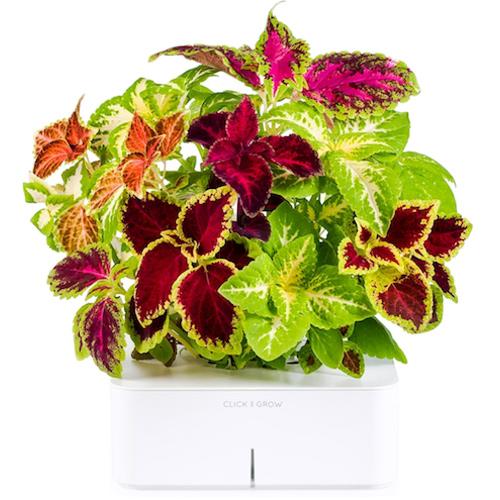 Смартпот Click and Grow Разноцветная КрапиваУмные сады и фермы<br>Смартпот Click and Grow будет радовать прекрасными цветами и благоуханием, даря радость и вдохновение!<br><br>Цвет: Белый<br>Материал: Пластик