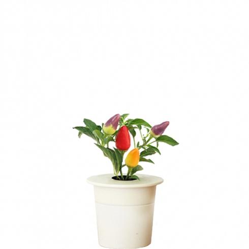 Картридж для Умного сада Click and Grow Перец ЧилиУмные сады и фермы<br>Картридж для умного сада Click and Grow Перец Чили<br><br>Цвет товара: Белый