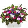 Смартпот Click and Grow БальзаминУмные сады и фермы<br>Смартпот Click and Grow будет радовать прекрасными цветами и благоуханием, даря радость и вдохновение!<br><br>Цвет товара: Белый<br>Материал: Пластик