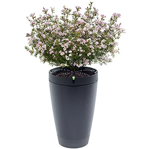 Умный горшок для растений Parrot Pot чёрныйУмные сады и фермы<br>Parrot Pot – это умный горшок, ухаживающий за вашими растениями.<br><br>Цвет товара: Чёрный<br>Материал: Пластик
