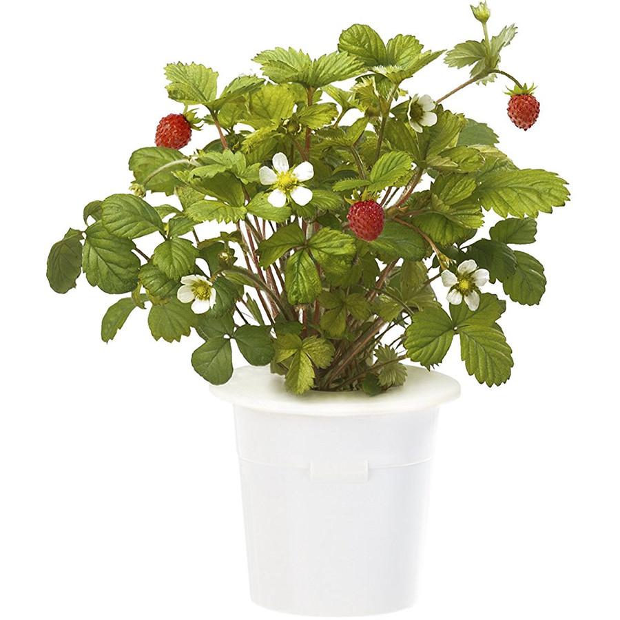 Набор картриджей для умного сада Click and Grow Refill 3-Pack ЗемляникаУмные сады и фермы<br>Благодаря Click and Grow вы сможете наслаждаться земляникой круглый год!<br><br>Цвет товара: Белый<br>Материал: Пластик
