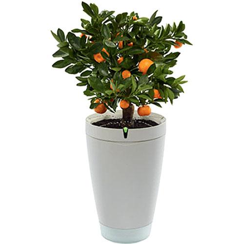 Умный горшок для растений Parrot Pot белыйУмные сады и фермы<br>Parrot Pot – это умный горшок, ухаживающий за вашими растениями.<br><br>Цвет товара: Белый<br>Материал: Пластик