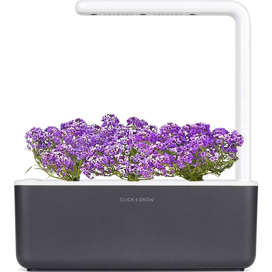 Умный сад Click and Grow Smart Garden 3 Алиссум душистый (чёрная крышка)